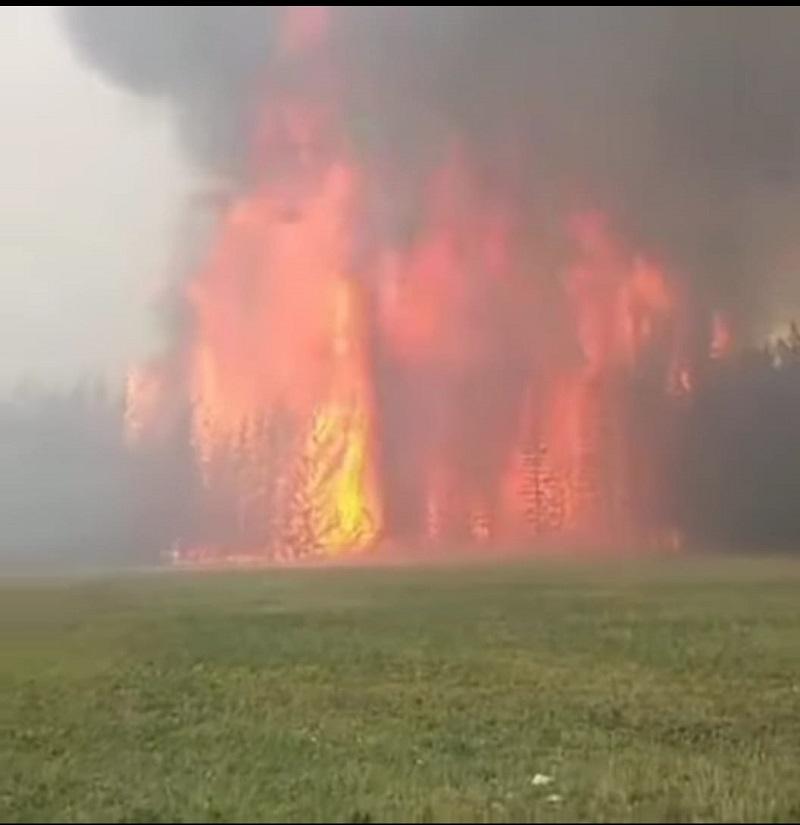 Может ли микроорганизация ООО «Авиакомпания «МиАн» из Ростовской области потушить лесные пожары в Якутии?